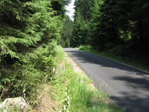 Takhle to má vypadat v lese (asfalt pro koloběžky)